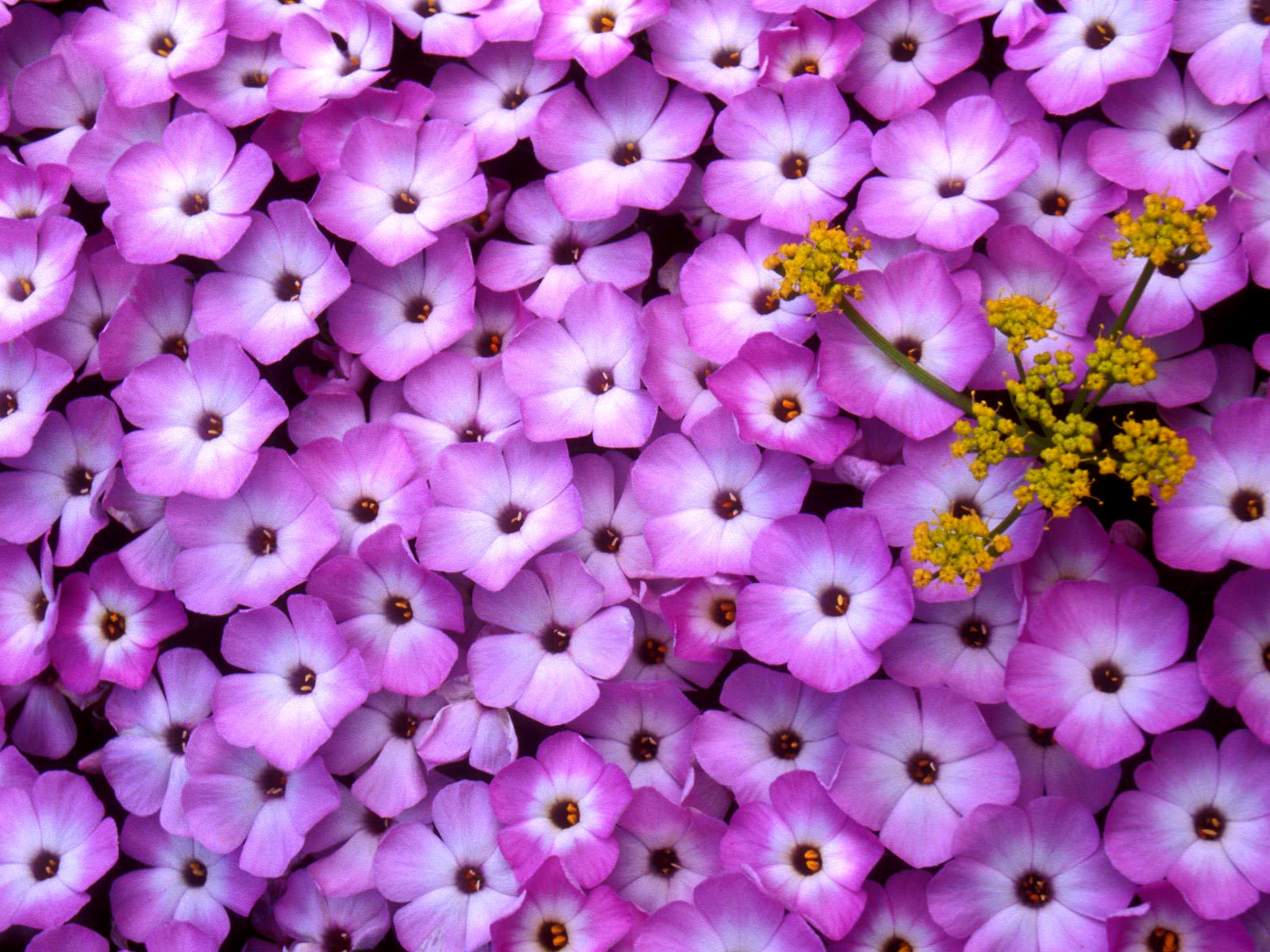 Toko Bunga Florist Di Jakarta Murah Cantik Dan Berkesan