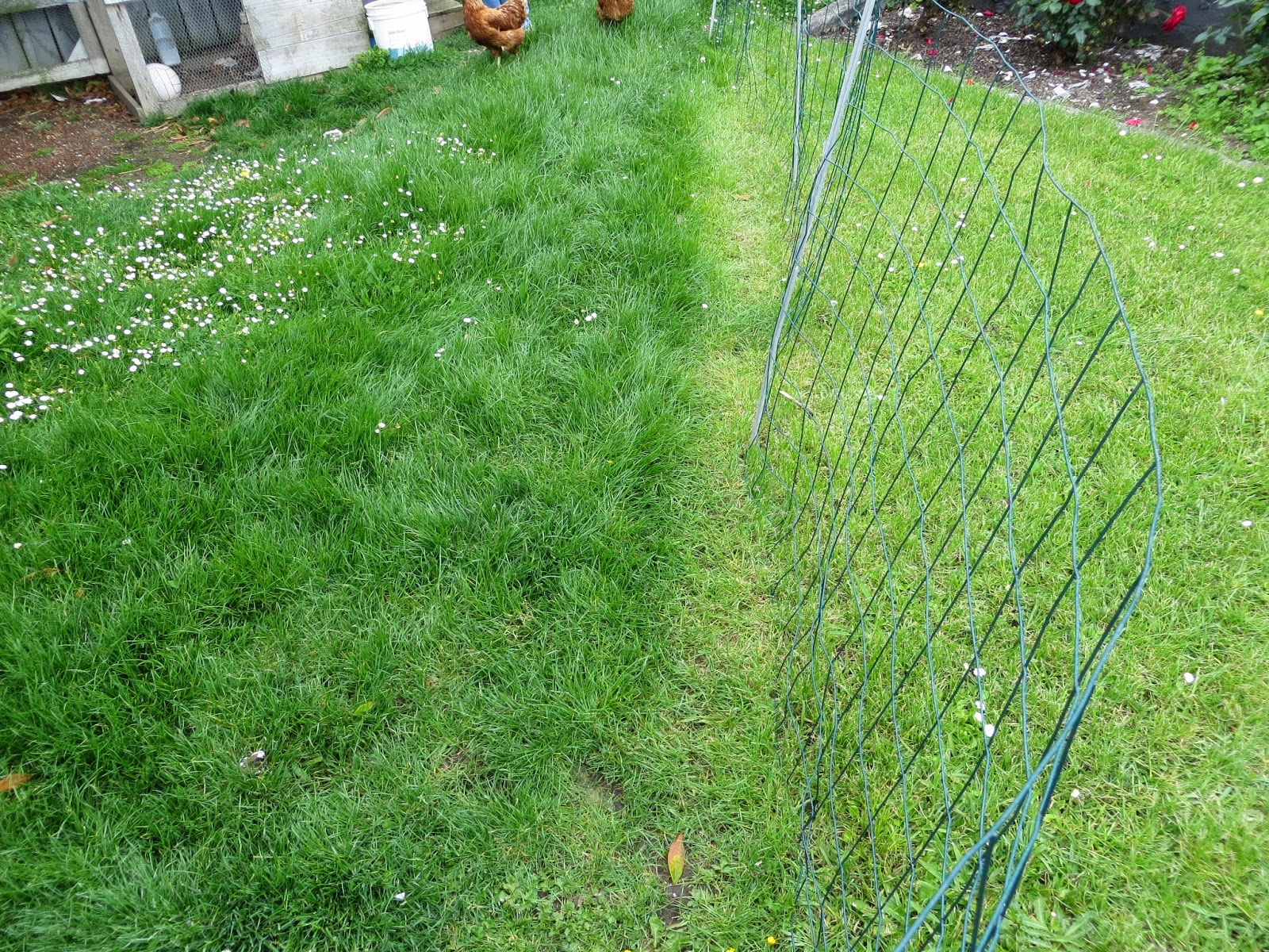 Healthy Lawn Part - 17:  Healthy Lawn Images