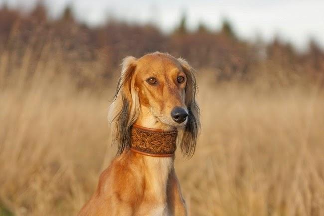 Zaburzenia psychosomatyczne u psa
