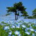 Le Parc Hitachi Seaside au Japon
