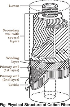 Physical Structure of Cotton Fiber