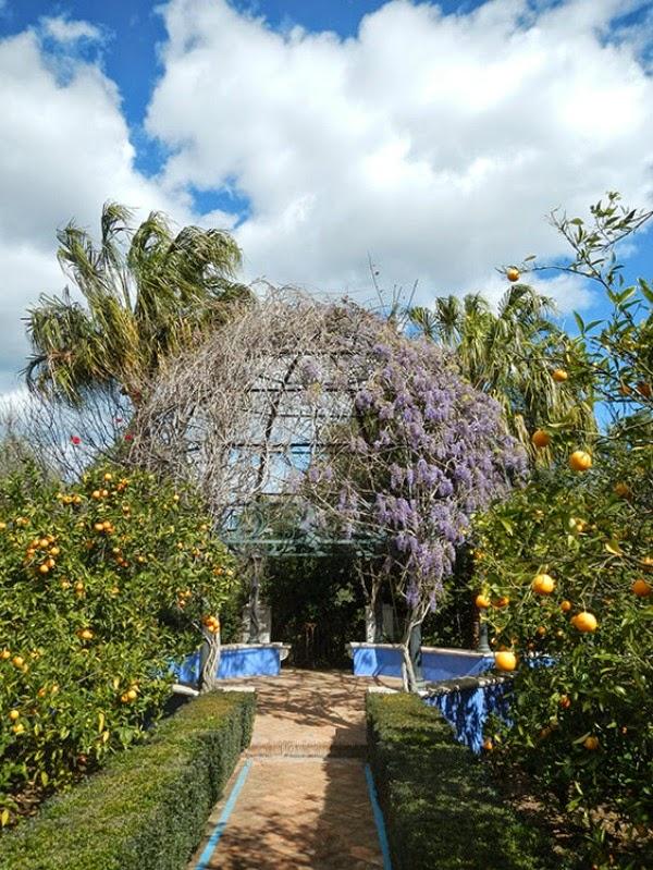 El jard n mediterr neo de l 39 albarda guia de jardin - El jardin mediterraneo ...
