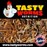 Buy Tasty Worms