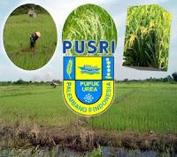 Lowongan Kerja 2013 Pupuk Sriwijaya November 2012 untuk Tingkat SLTA, D3 & S1
