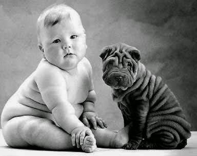 Por que engordamos mais se comparado aos animal?