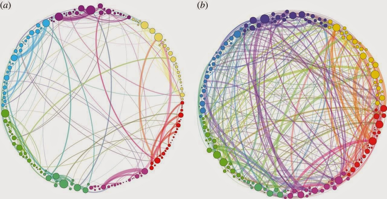 shrooms_brain_networks