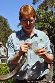 Profesi unik Tukang perah racun ular
