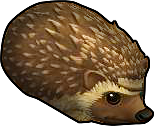 Pirate101 Best Grizzly Beast Pack Gear / Items - Hedgehog Pet