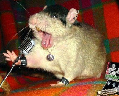 Funny Singing Animals