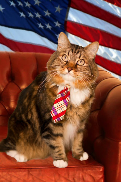 Hank the Cat for Senate
