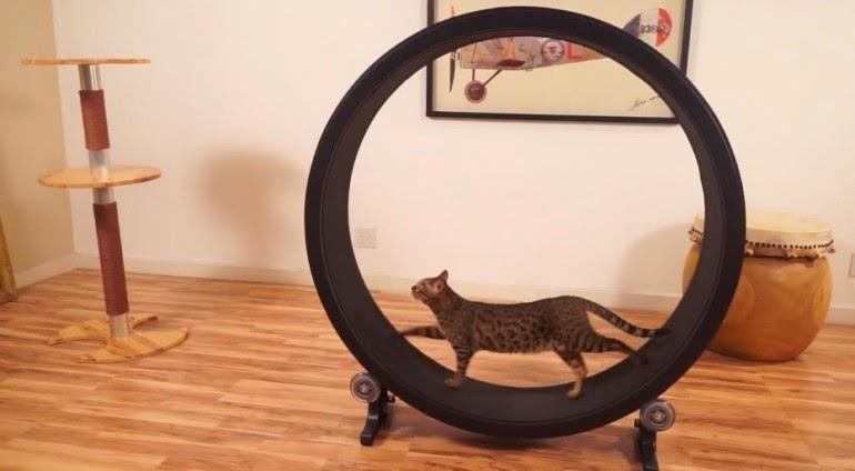 Беговое колесо для кошек сделать своими руками 93