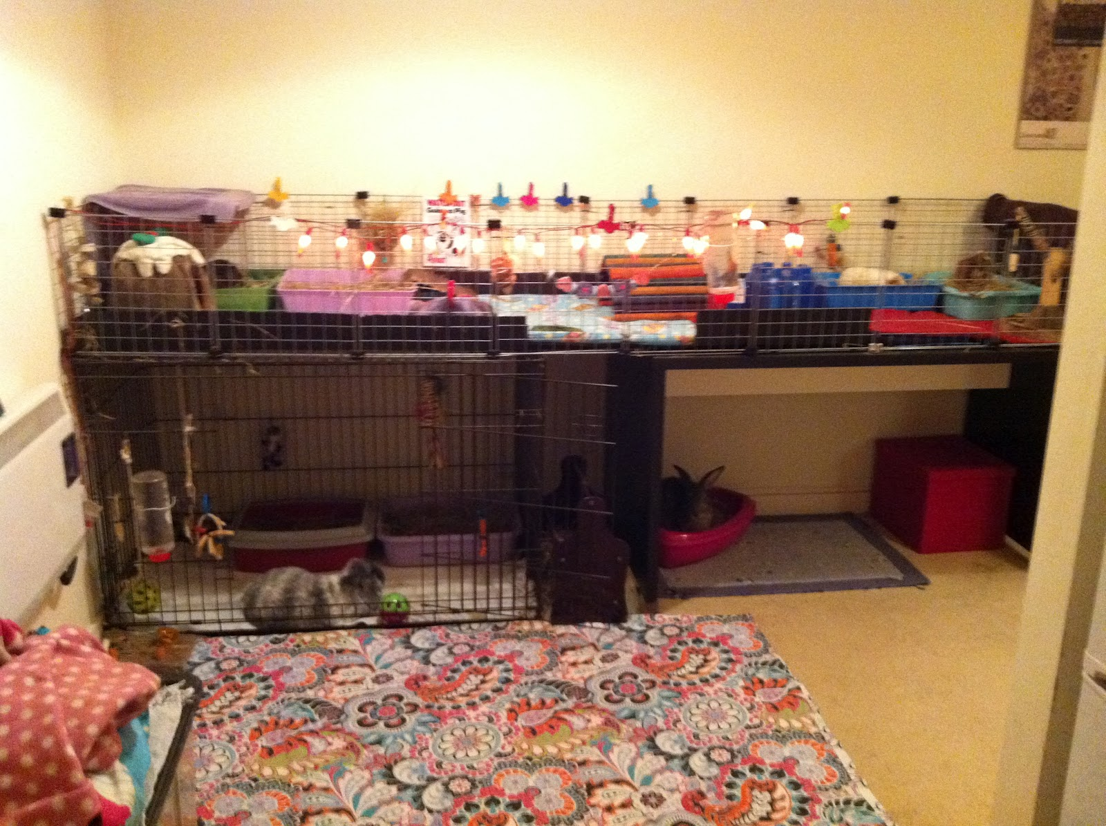 The diary of an rspca guinea pig day 48 49 c c cages v for Cheap c c cages