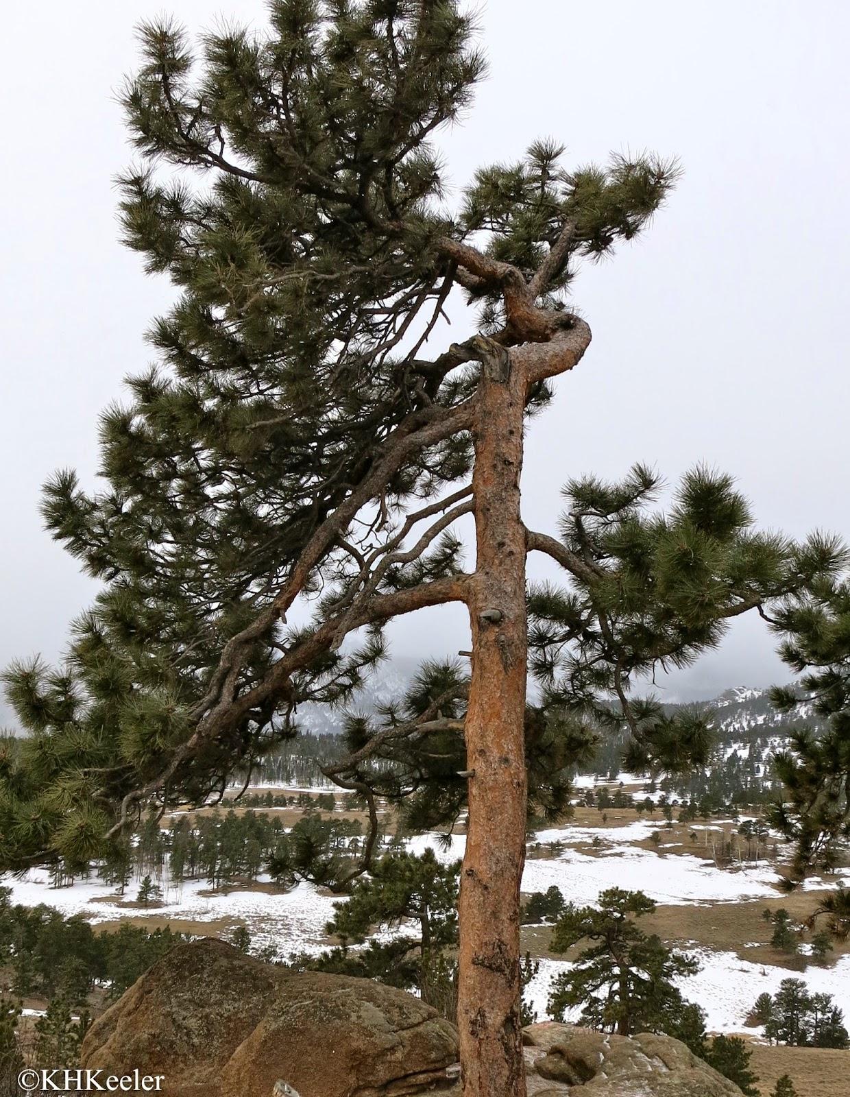 Rocky Mountain National Park April 2 2014