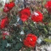 'Les roses franques (Toni Arencón i Arias)'