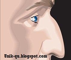 hidung Hawk
