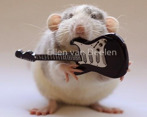 11-Electric-Guitar-Player-Musical-Dumbo-Rat-Ellen-Van-Deelen-www-designstack-co