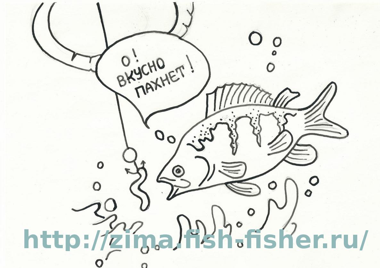 Аттрактанты — вещества, привлекающие рыбу