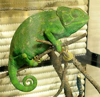 Animal verde