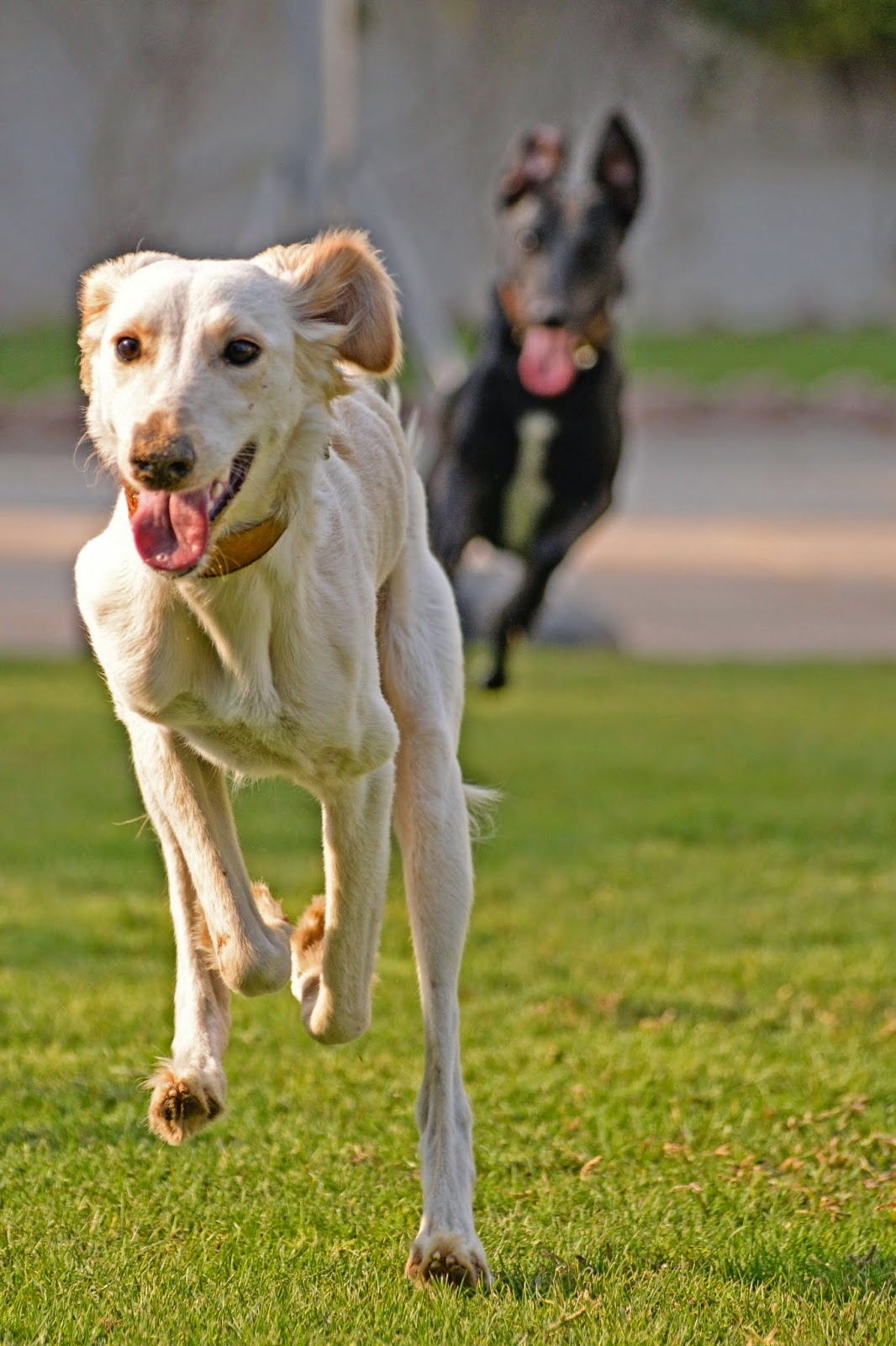 Lily and Bella run