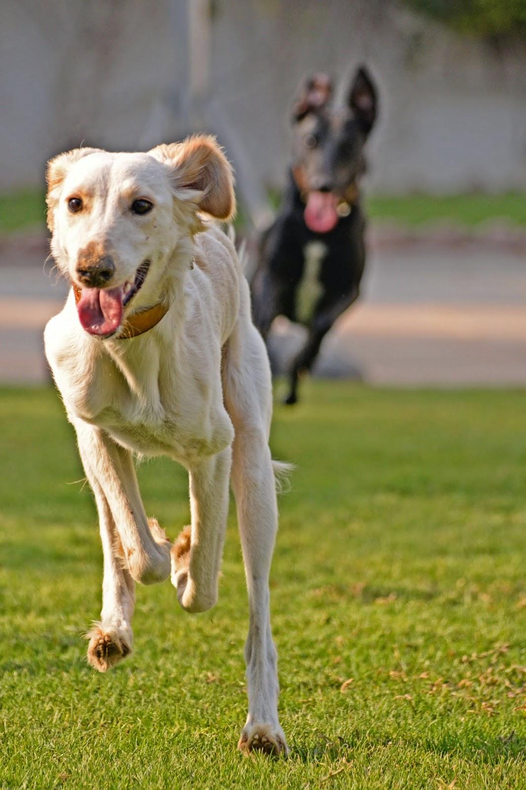 Lily and Bella run