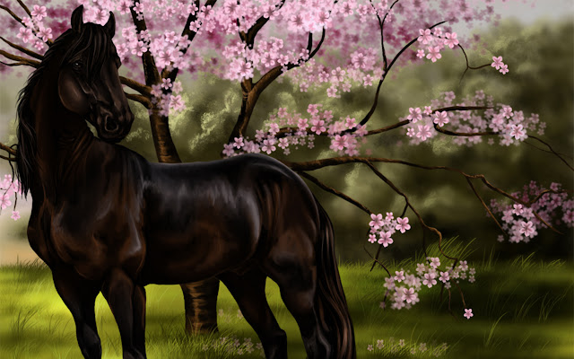 horses+pictures+%25282%2529