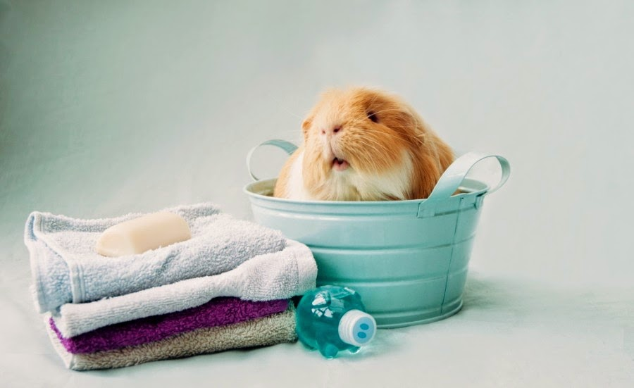 Cutest Hamster Pictures Ever Seen on the Internet