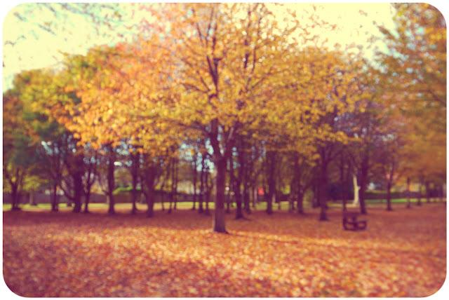 autumn fall colours trees