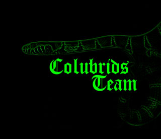 Colubrids Team