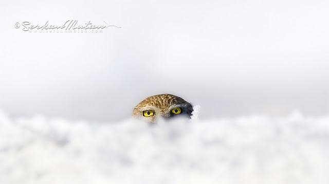 karda fotoğraf çekimi