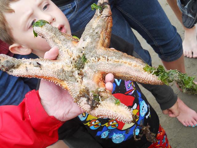 starfish at Cannon Beach