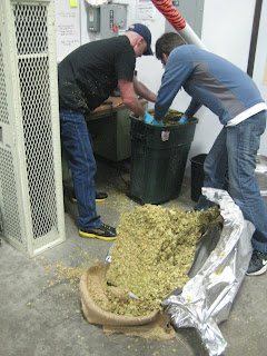 Measuring out 30# and breaking up the hops.