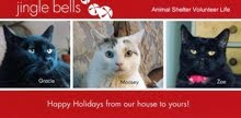 2013 HOLIDAY CARD GALLERY
