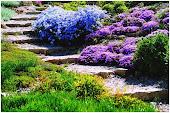 Сад начинающего цветовода