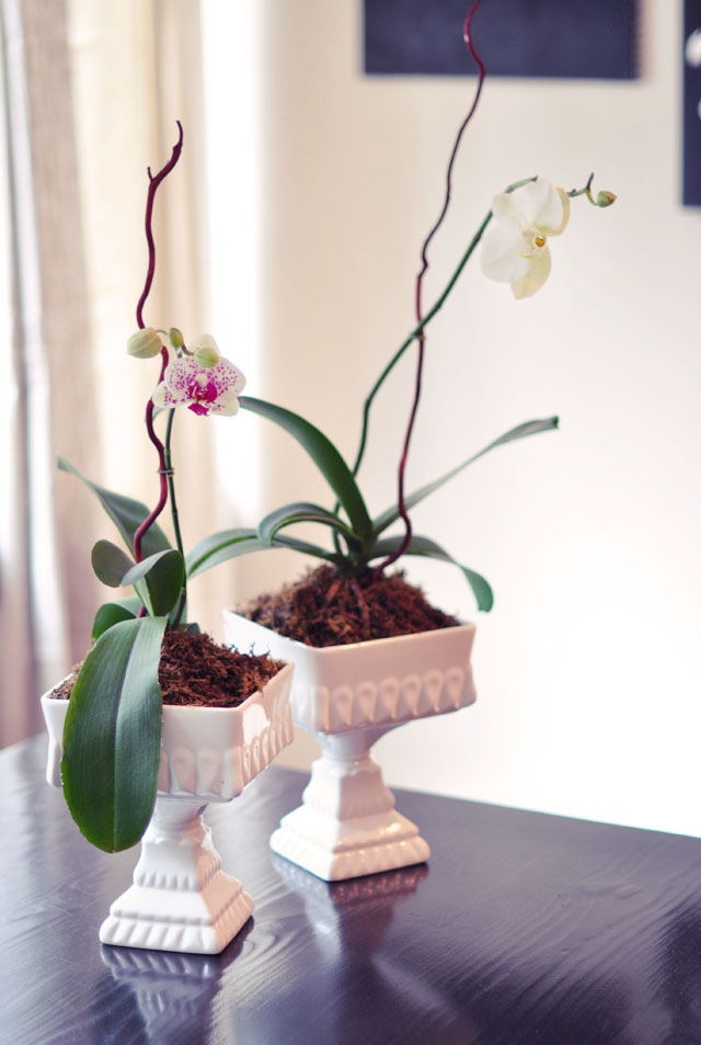orchid, regrow orchids, blooming orchids