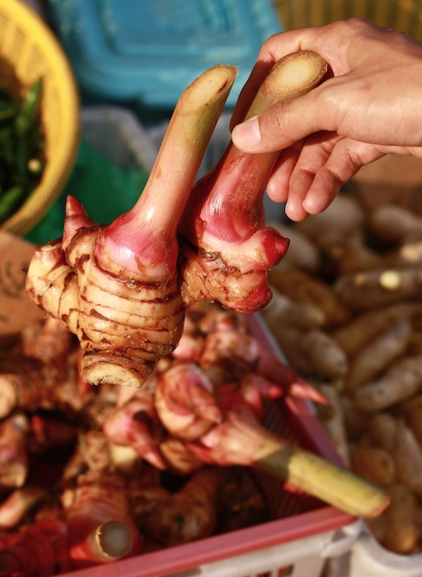 mature greater galangal spice sold at morning market in penang malaysia