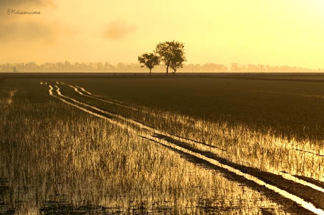humedales arrozales carrilet delta ebro carrilet tortosa desembocadura rio ebro