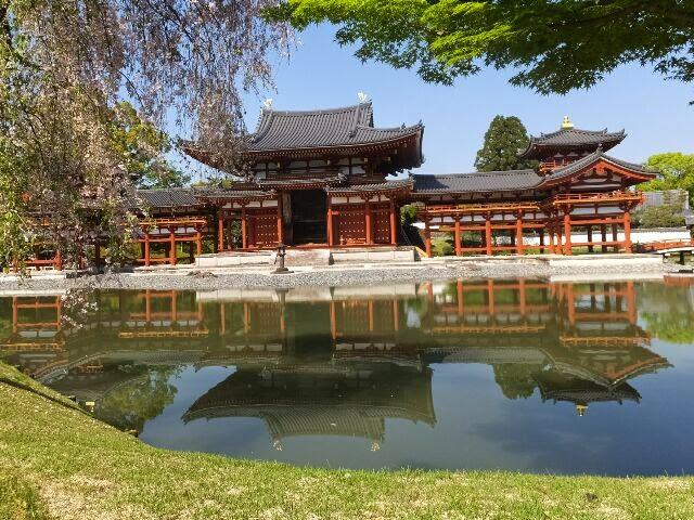 しだれ桜と阿字池と鳳凰堂。