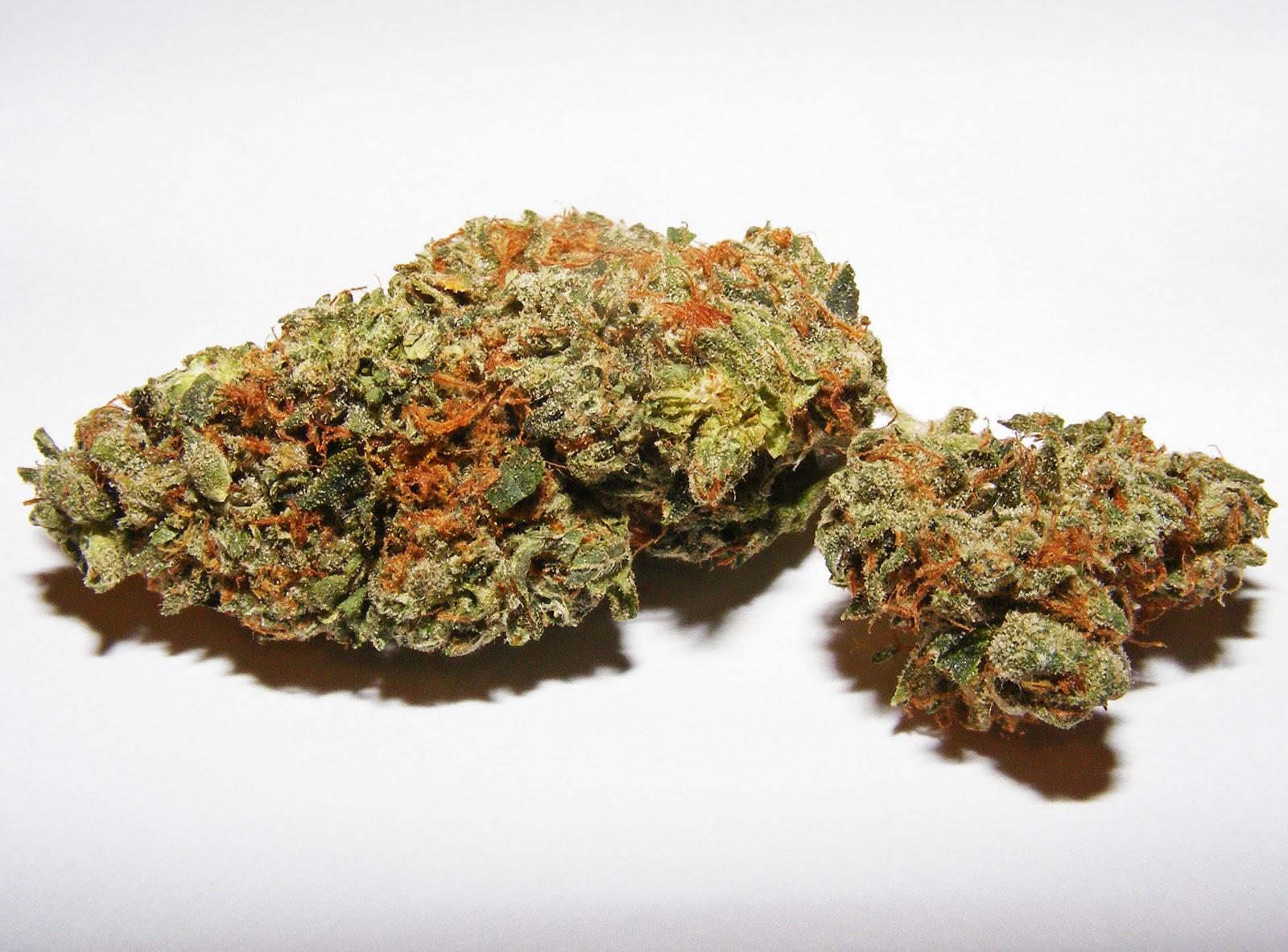 Gram of weed related keywords amp suggestions 1 gram of weed long