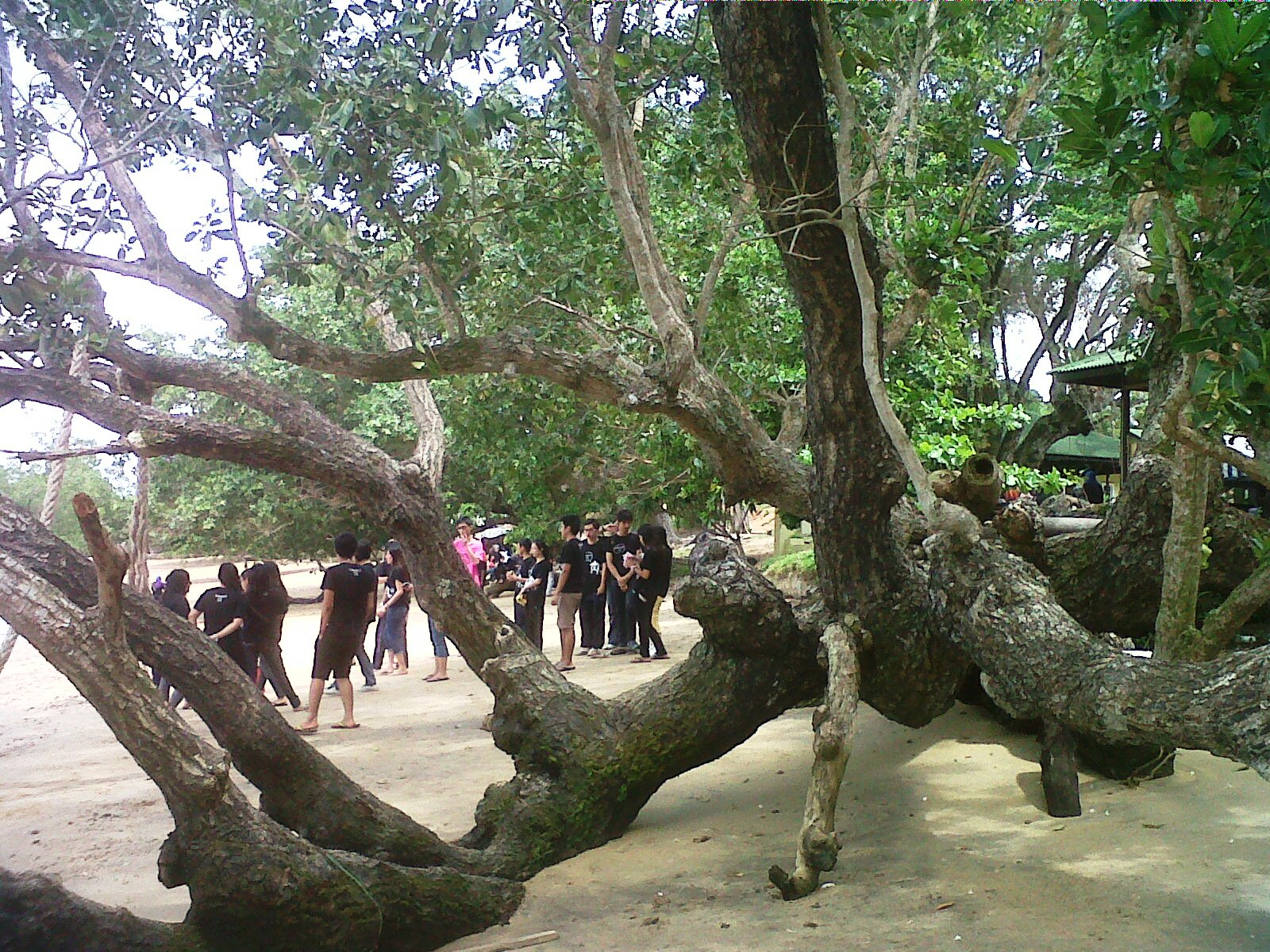 IPTA students activities at Umang Umang Beach