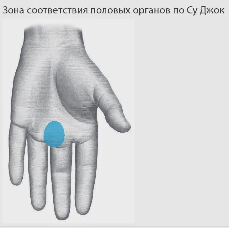 Миометрит