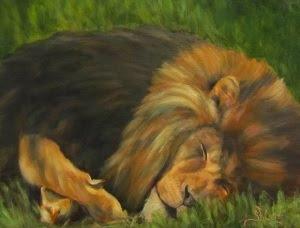 """Lion Around"",  sleeping male lion"