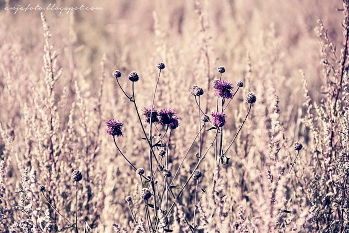 lato, łąka, anjafotografia