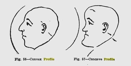 Convex Lens Vs Concave Lens : Concave vs convex profile updated expressing your