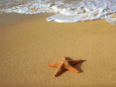 Estrella de mar en la arena