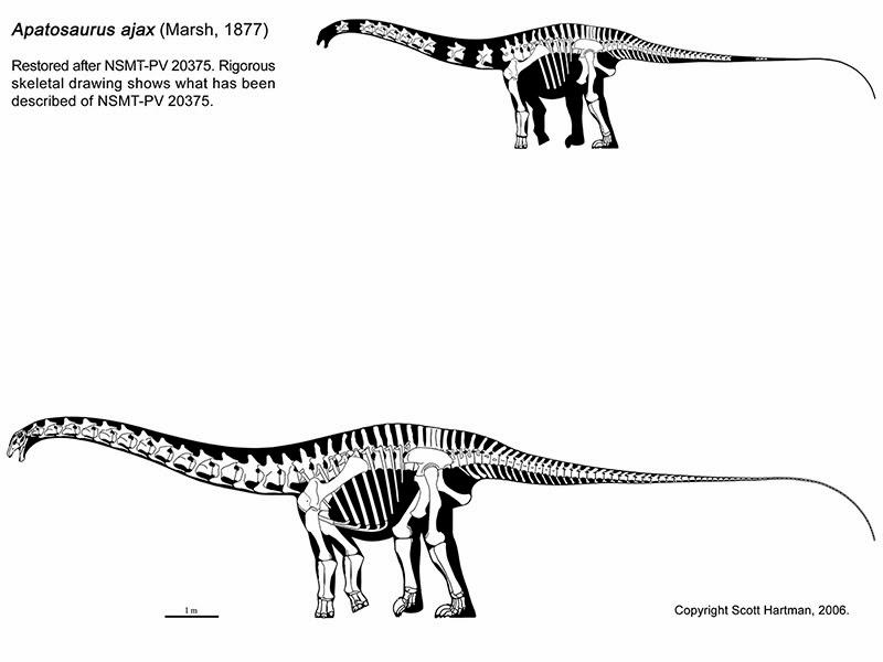Dinosaur Train Apatosaurus 28 December 2013