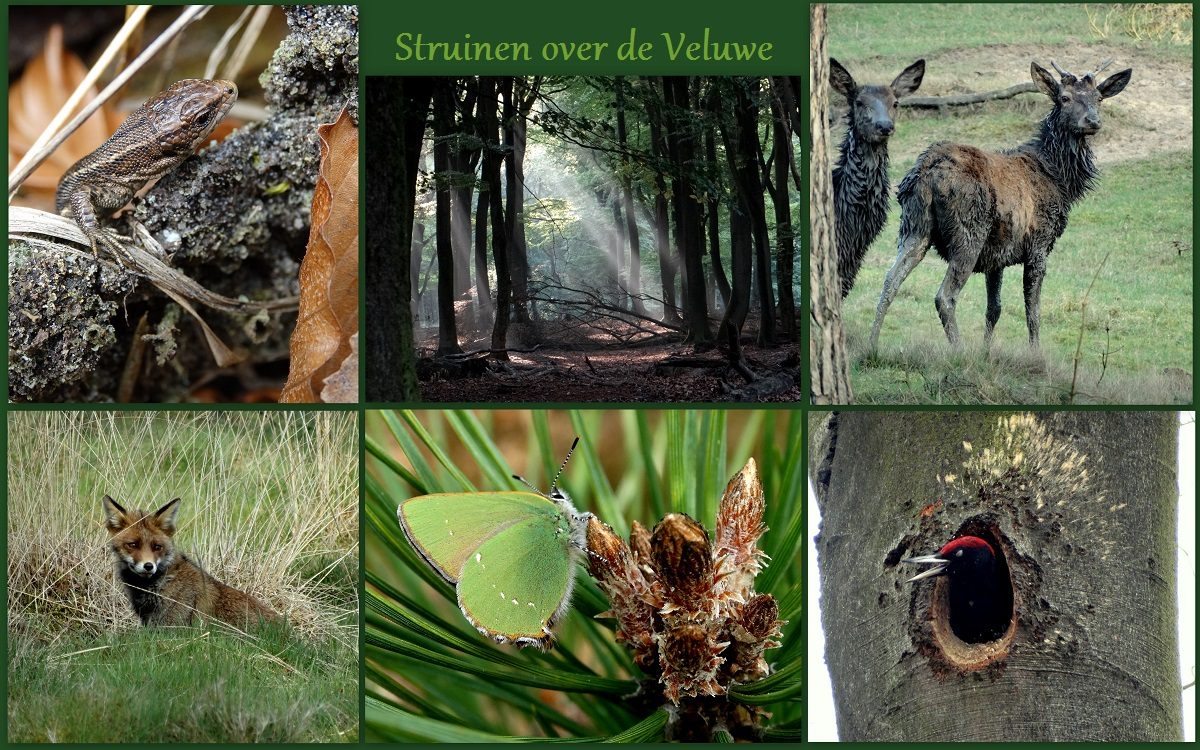 struinen over de Veluwe