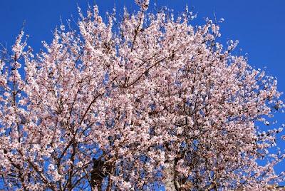 Només flors i cel...