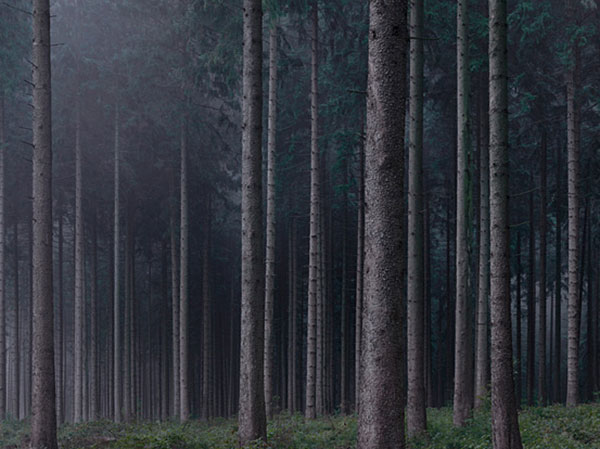 Wald: Photos by Michael Lange