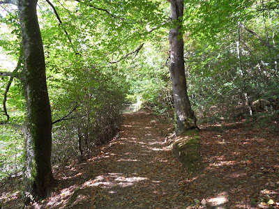 Ethy Woods Cornwall