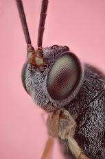 Esos Malévolos Insectos